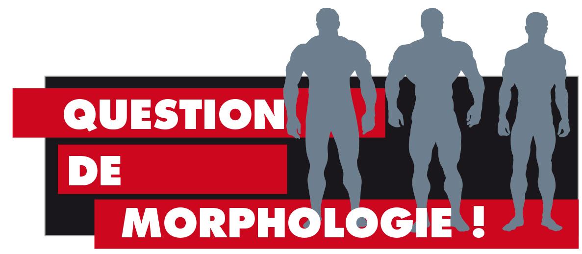 Les morphologies musculation